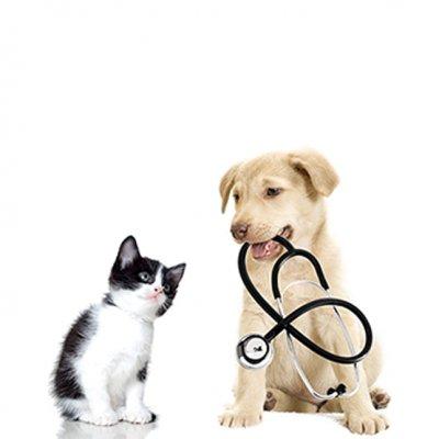 03 Receba nosso veterinário